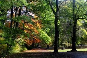 Peter Bayliss, Autumn in Endcliffe Park 31 Oct 2015