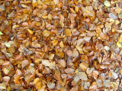 autumn-leaves-background-725x544