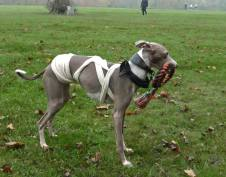 graves parkrun mummy dog