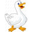 clucky duck