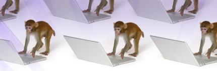 monkeys and laptops