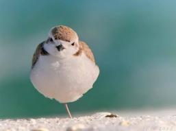 One Leg Bird