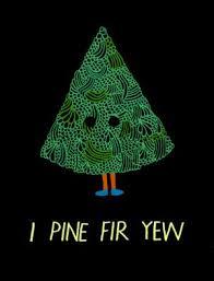 pine fir yew