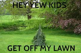 yew kid