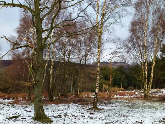 lovely longshaw