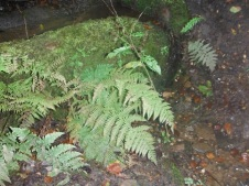 ferny-thing-happened-in-the-woods