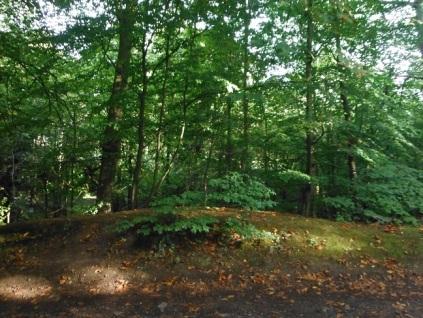 hobbit-habitat