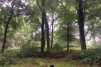 JC atmospheric moss shot