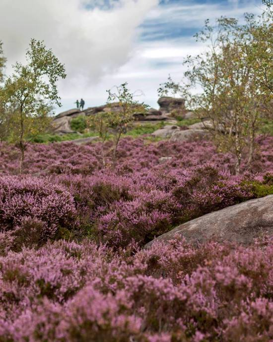 Longshaw heather from their facebook page