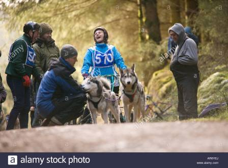 dog-sport-scotland-husky-huskies-sled-dog-team-with-female-rider-await-ar6yej