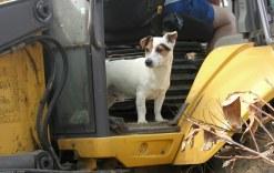 dog-supervisor