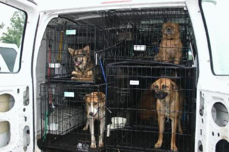 dogs-van