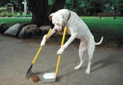 responsible-dog