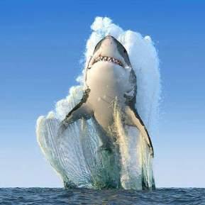 shark-breach