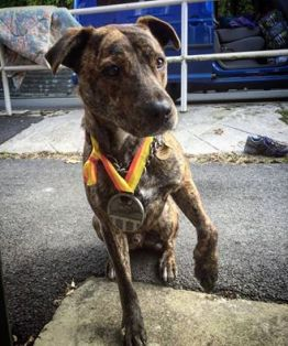 skip-with-medal