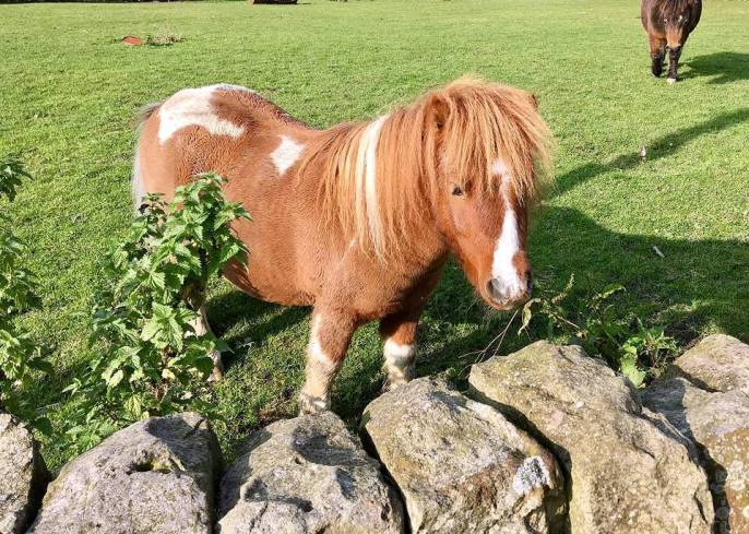 ww-pony-company-for-roger-and-ginger