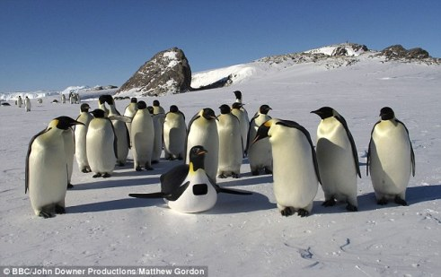 penguin-cam