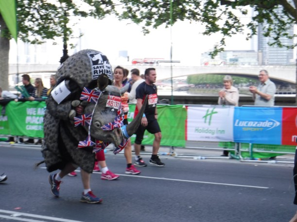 rhino run