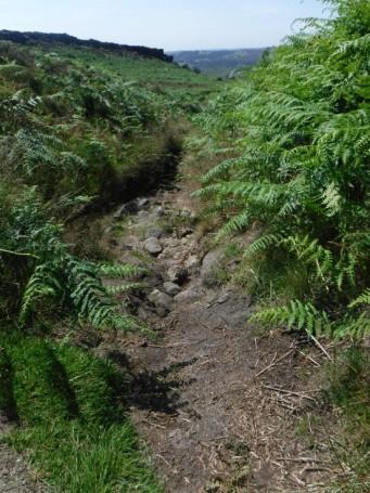 DD bracken forest
