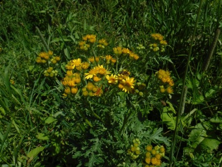 DD flora
