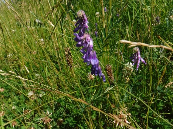 DD purple flora