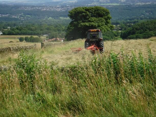 DD rural scene