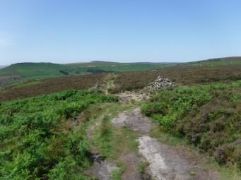 DD trail