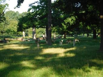 deer in Bushy park sept 2017