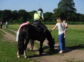 pony patting