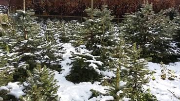 Longshaw Christmas Trees