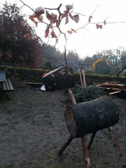 reindeer longshaw