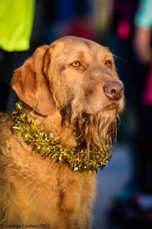 tinsel hound