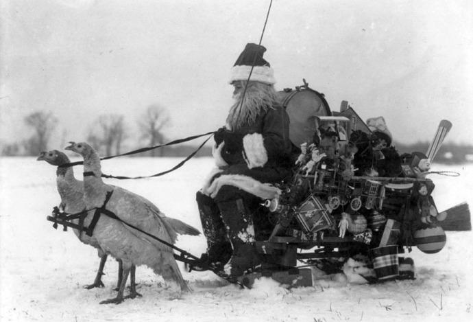 wild turkeys pulling santa