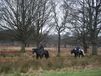 horse riders richmond park