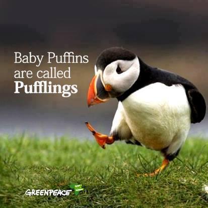puffling