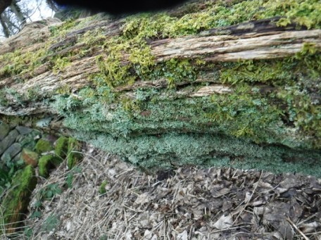moss and lichen covered fallen tree