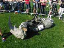 rhino gutted