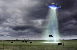 cow abducted by aliens