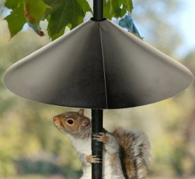 xsquirrel-baffle-bird-feeders.jpg.pagespeed.ic.1xKMe5gFve
