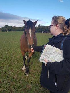 cs horse whispere