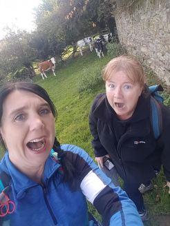 cs the cows