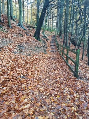 cs autumn steps
