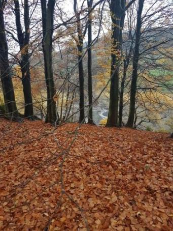 cs autumn