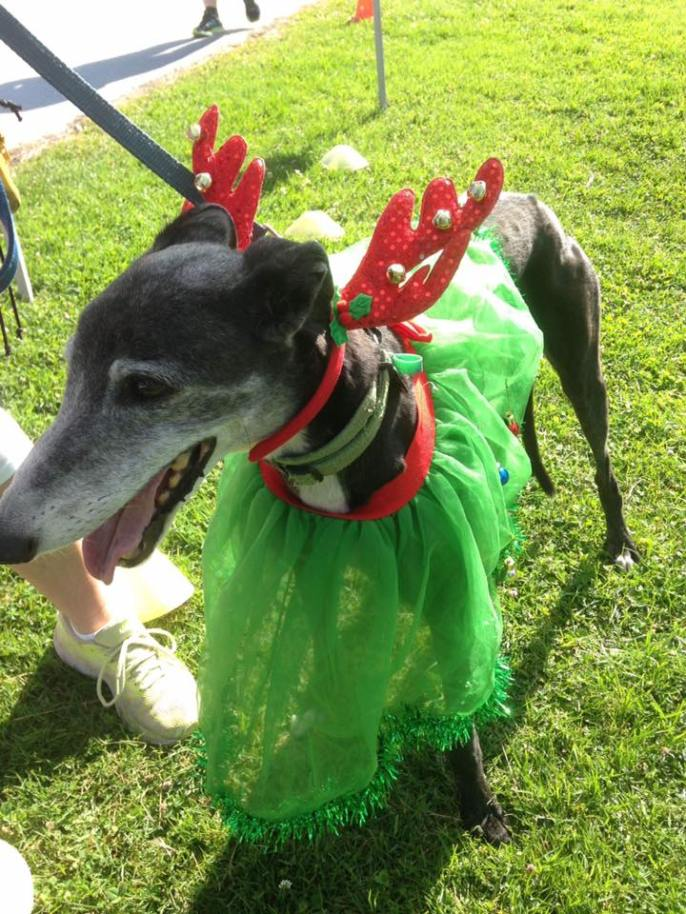 Inverloch parkrun reinrundog