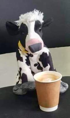 cant go wrong with a cow