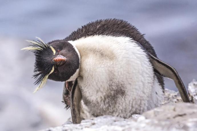 penguin-awareness-day-fun1