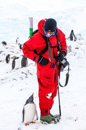 penguin marshal