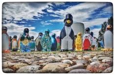 penguin parade maggies