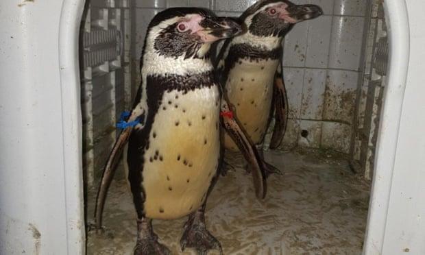 saved penguins