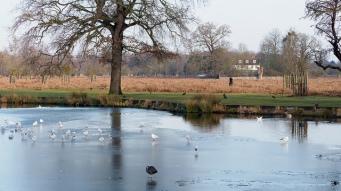 MDH frozen pond
